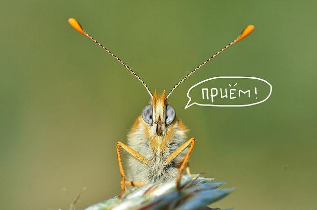 Приём! Фото Gilles San Martin, flickr.com