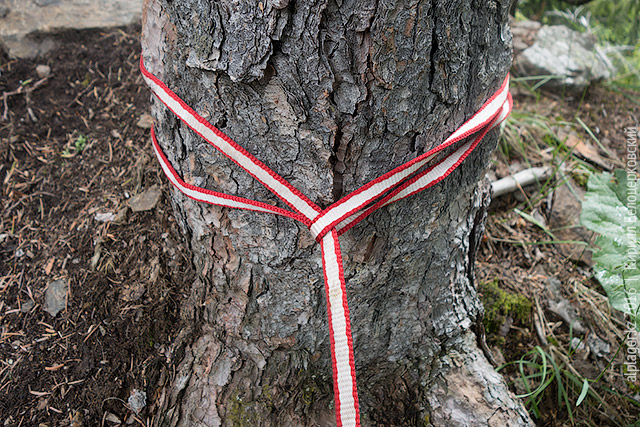 Полусхватывающий узел вокруг дерева